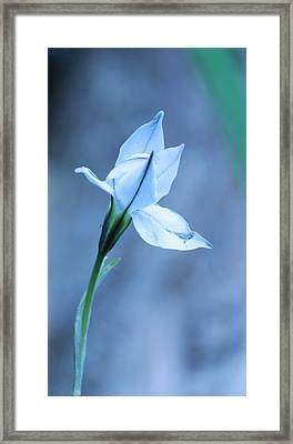 Spring Flowers Framed Print by Theresa Selley