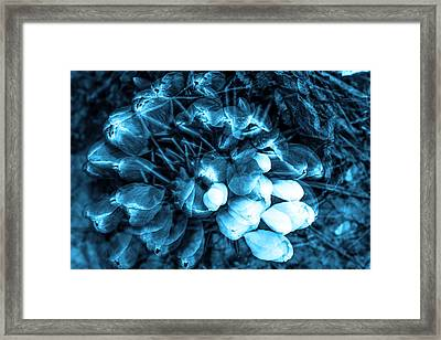Spring Flowers Framed Print by Tommytechno Sweden