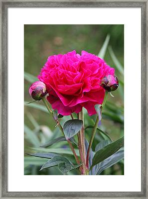 Spring Flowers Framed Print by Vadim Levin
