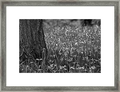 Spring Flowers  Waterloo, Quebec, Canada Framed Print
