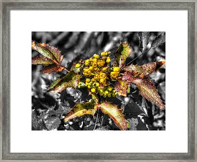 Spring Flowers Yellow Framed Print