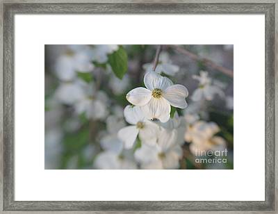 Spring Focus Framed Print by Kay Pickens