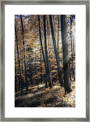 Spring Forest Framed Print by Bruno Santoro
