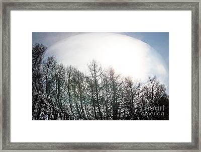 Spring Forest Framed Print