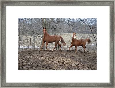 Spring Frolic Framed Print by Jennifer  King
