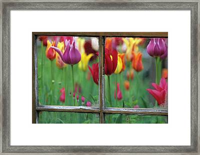 Spring Garden Behind Old Window Framed Print