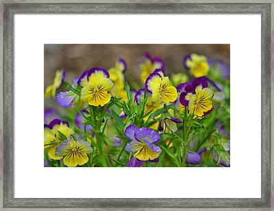 Spring Garden Framed Print by Marjorie Tietjen