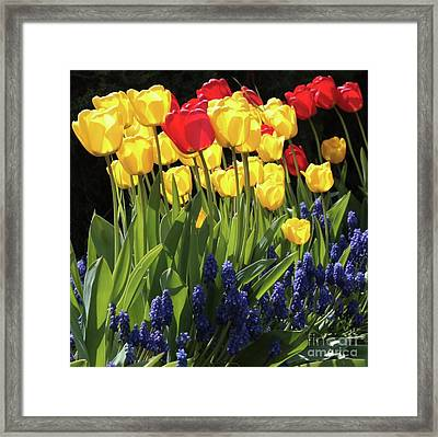 Spring Garden Sunshine Square Framed Print by Carol Groenen