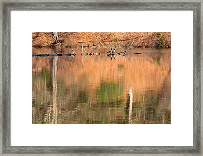 Spring Geese Framed Print by Bill Wakeley