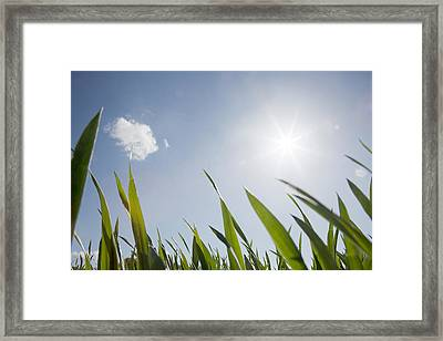 Spring Grass And Sun In The Sky Framed Print by David Trood