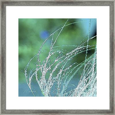 Spring Grass Framed Print by Artist and Photographer Laura Wrede