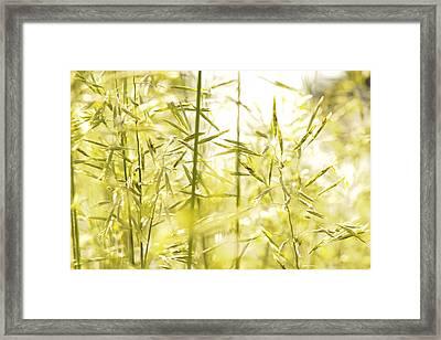 Spring Grasses Framed Print by Daniel Kasztelan