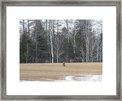 Spring Grazing Framed Print