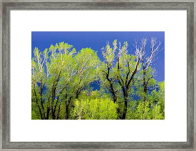 Spring Green Before The Storm Framed Print by Joan Herwig