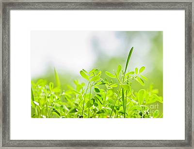 Spring Green Sprouts Framed Print by Elena Elisseeva