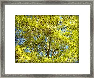 Spring Greening Framed Print by Lorraine Heath