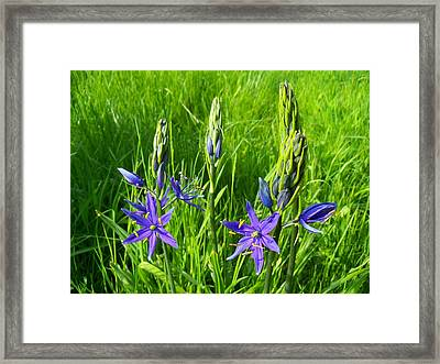 Spring Greetings Framed Print