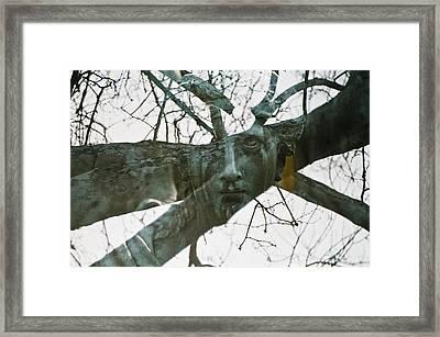Spring Grove 13 Framed Print by Scott Meyer