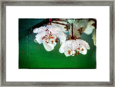 Spring Haiku Poetry With Cherry Blossoms And Dew Drops Framed Print by Peter v Quenter