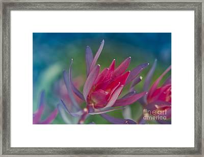Spring Harmony Framed Print by Sharon Mau