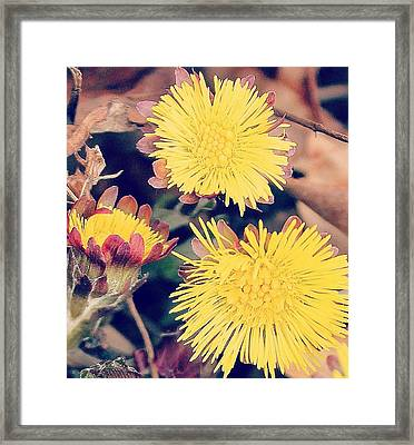 Framed Print featuring the photograph Spring Has Arrived by Candice Trimble