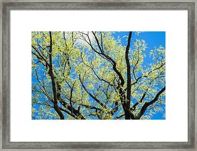 Spring Has Come - Featured 3 Framed Print by Alexander Senin
