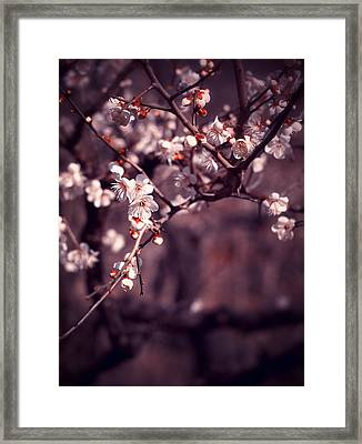 Spring Has Come Framed Print