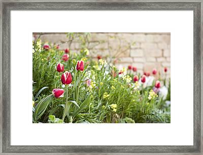 Spring Has Sprung Framed Print by Anne Gilbert