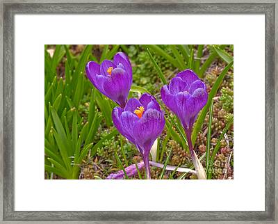 Spring has sprung crocus flowers photograph by valerie garner - Valerie garnering ...