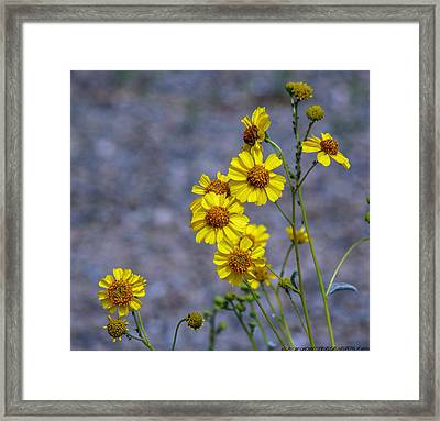 Framed Print featuring the photograph Spring Has Sprung by Elaine Malott