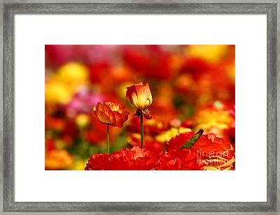 Carlsbad Spring Framed Print