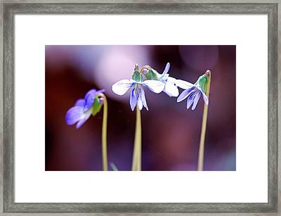 Spring Has Sprung Framed Print