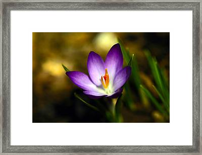 Spring Has Sprung Framed Print by Karol Livote