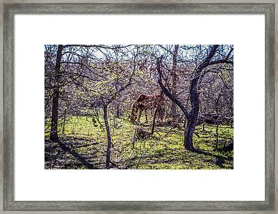 Spring Has Sprung Framed Print by Kelly Kitchens