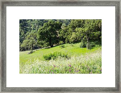 Spring Hike Framed Print by Suzanne Luft