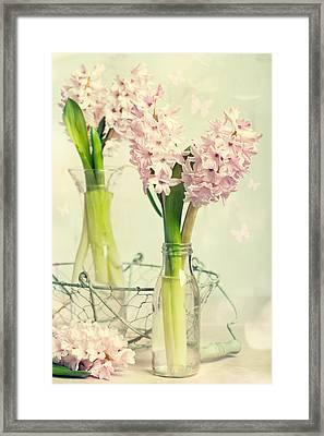 Spring Hyacinths Framed Print by Amanda Elwell