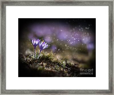 Spring Impression I Framed Print