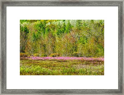 Spring In Acadia's Great Meadow Framed Print by Susan Cole Kelly