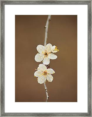 Spring In Bloom Framed Print by Kimberly Danner