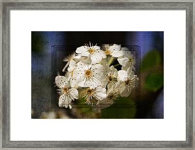 Spring In Bloom Framed Print