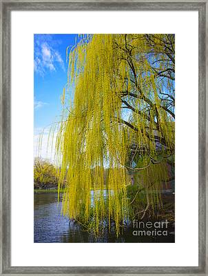 Spring In Central Park Nyc Framed Print