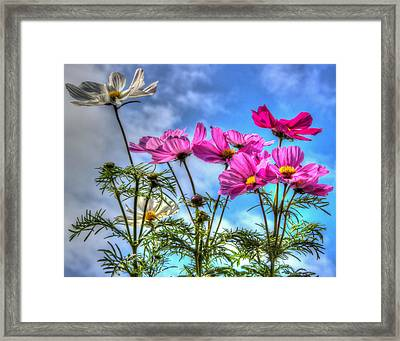 Spring In Full Swing Framed Print