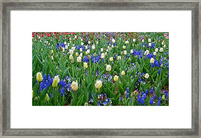Spring In Giverny Framed Print by Kathy Ponce