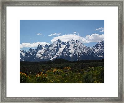 Spring In Grand Tetons National Park Framed Print