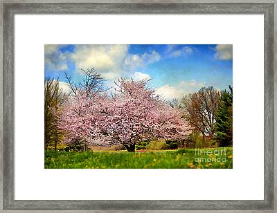Spring In Kentucky Framed Print by Darren Fisher