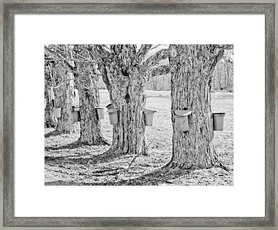 Spring In Maine Framed Print