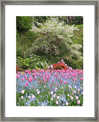 Spring In The Air Framed Print by Shirley Sirois