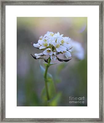 Spring In The Cimarrons Framed Print