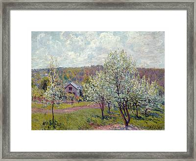 Spring In The Environs Of Paris, Apple Blossom Framed Print by Alfred Sisley