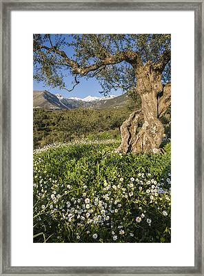 Spring In The Mani Greece Framed Print by Peter Eastland